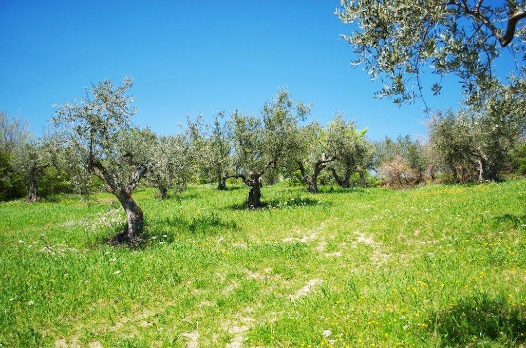 viadeicontrabbandieri-ulivi