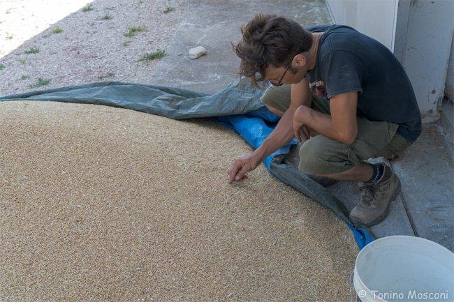 viadeicontrabbandieri-mietitura-analisi-del-grano